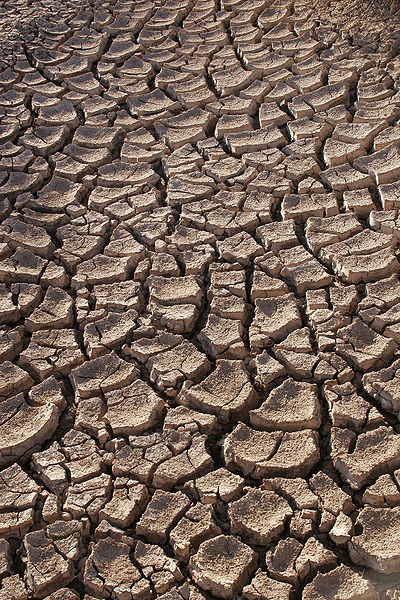 results of 2012 drought