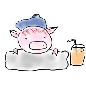 sick pig with ice pack