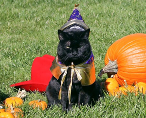 Cat dressed up for Halloween