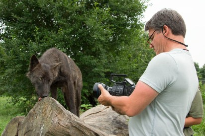 Photographer taking pictures of a wolf