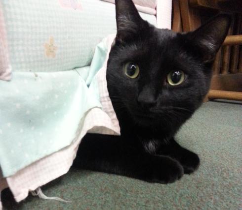 cat hiding under chair
