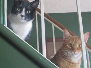 2 cats sitting on stairs