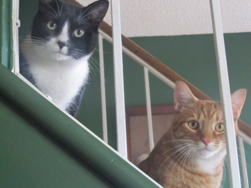 2 cats on a staircase